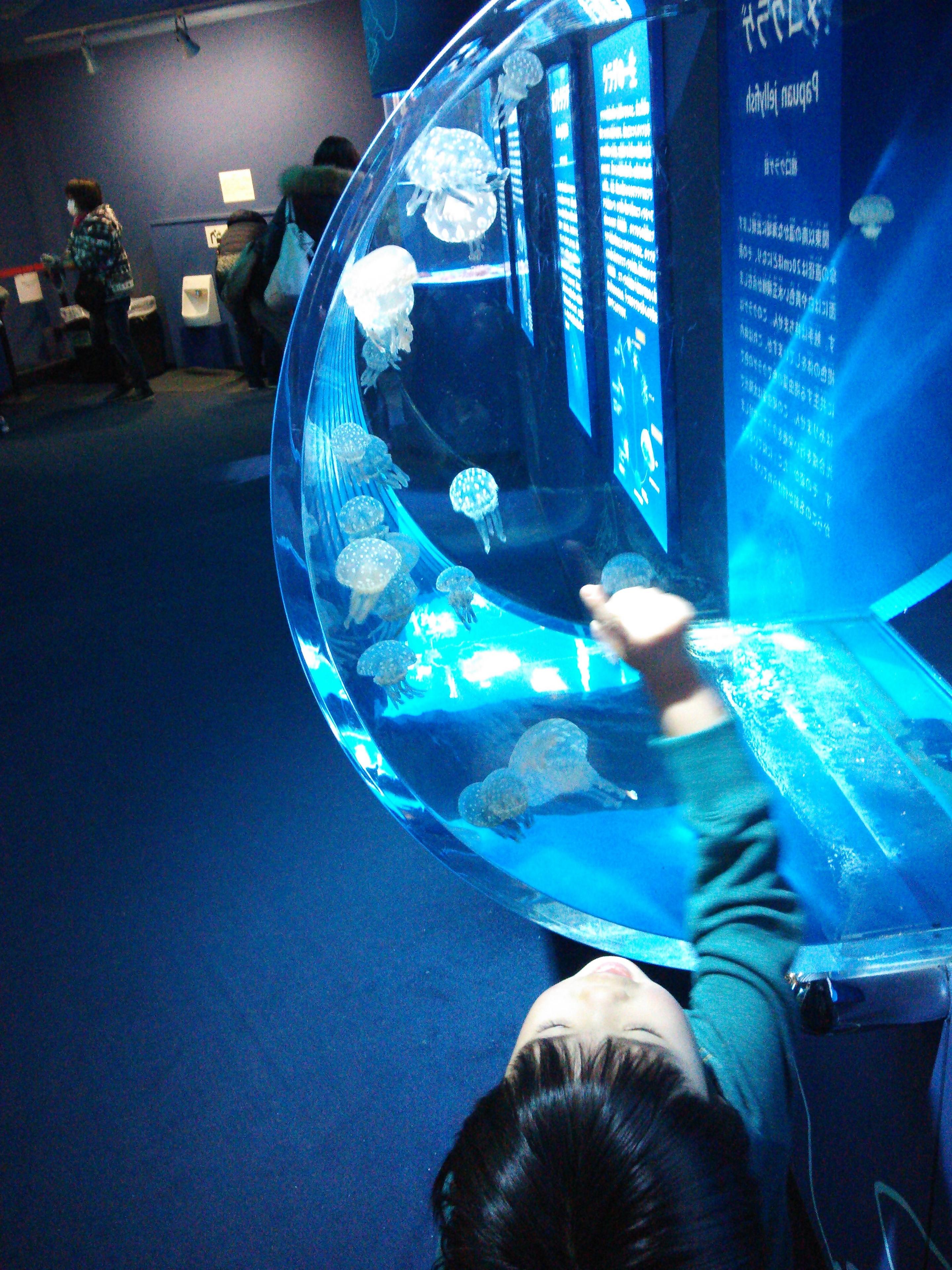 品川アクアスタジアムのクラゲ