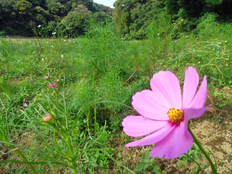 2013年9月くりはま花の国