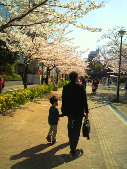 水神公園の桜