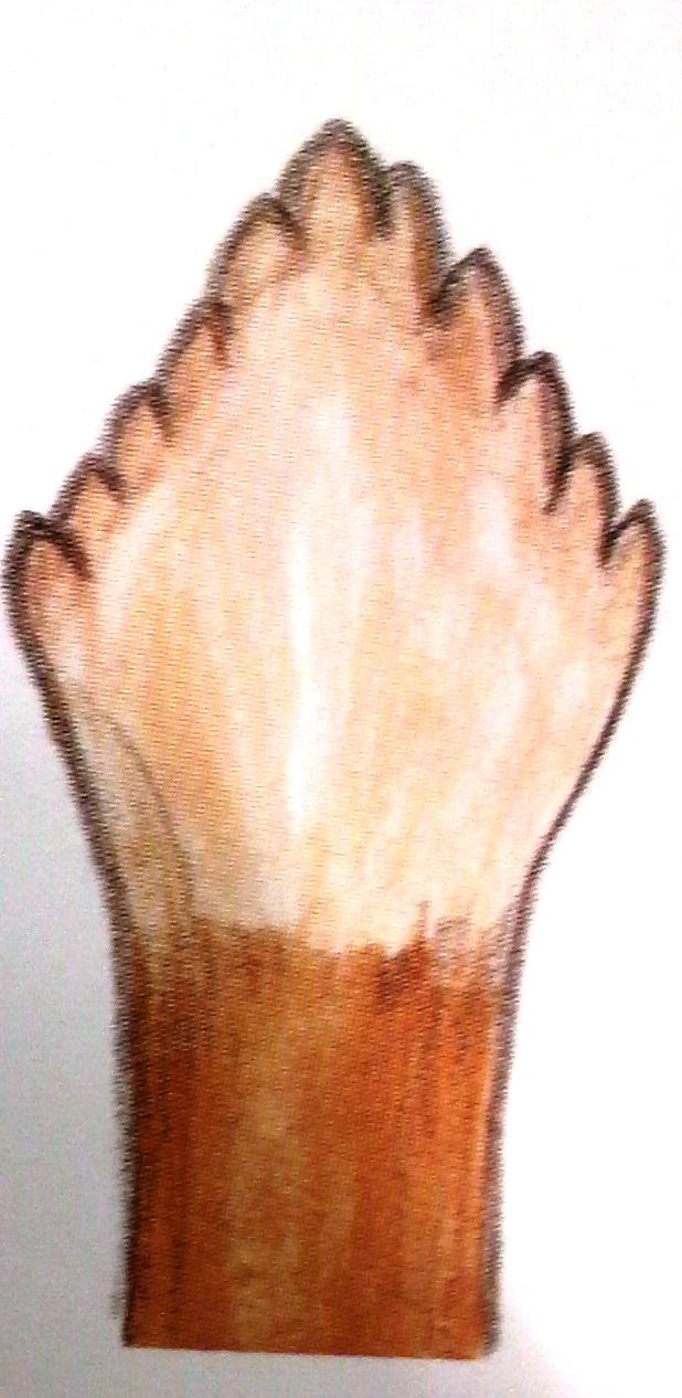 イグアナの歯
