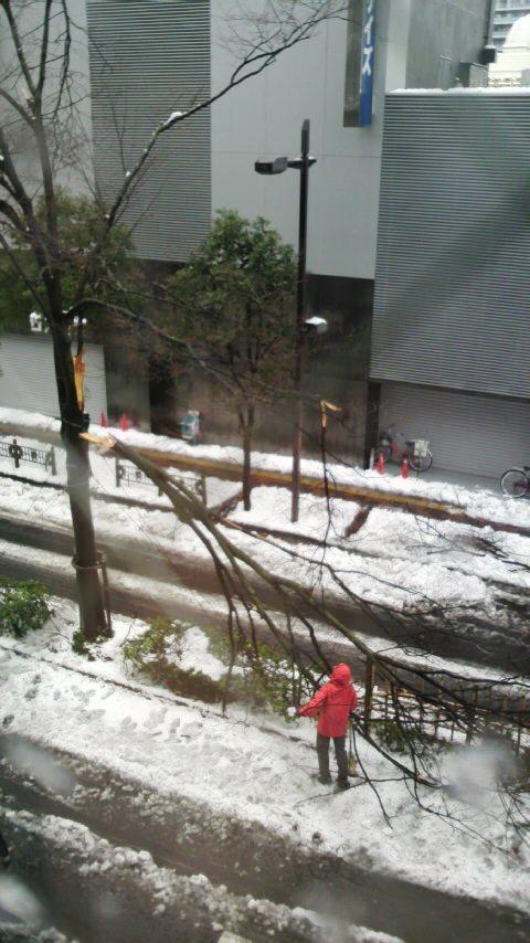 並木が雪で折れた