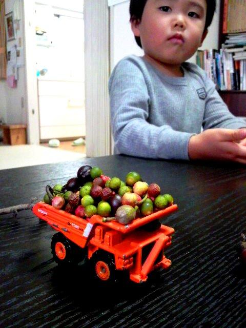 木の実とわが子
